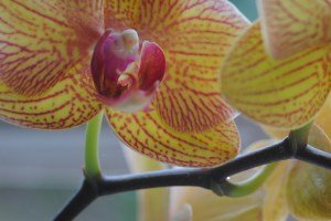 Red and yellow orchid flower at Being At The Cottage boutique business retreat