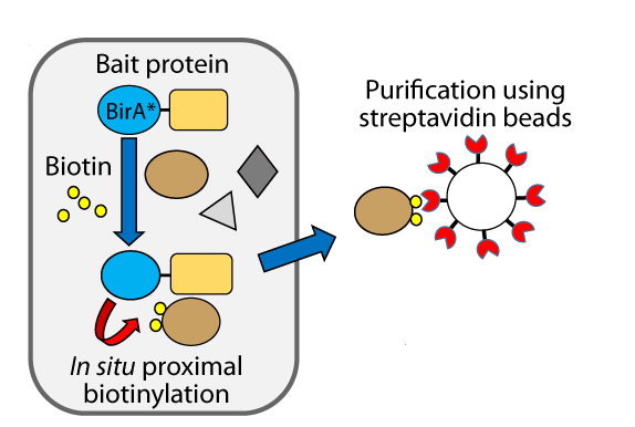 Image adapted from: DOI: 10.1371/journal.pone.0122886