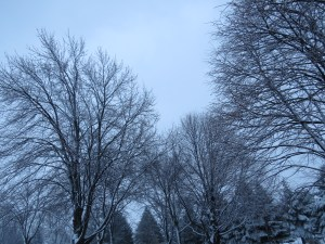 breathe in breathe out: winter trees: Paget's Disease: breast cancer