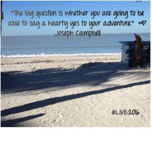 curiosity is a sh*t started [beach, joseph campbell quote]