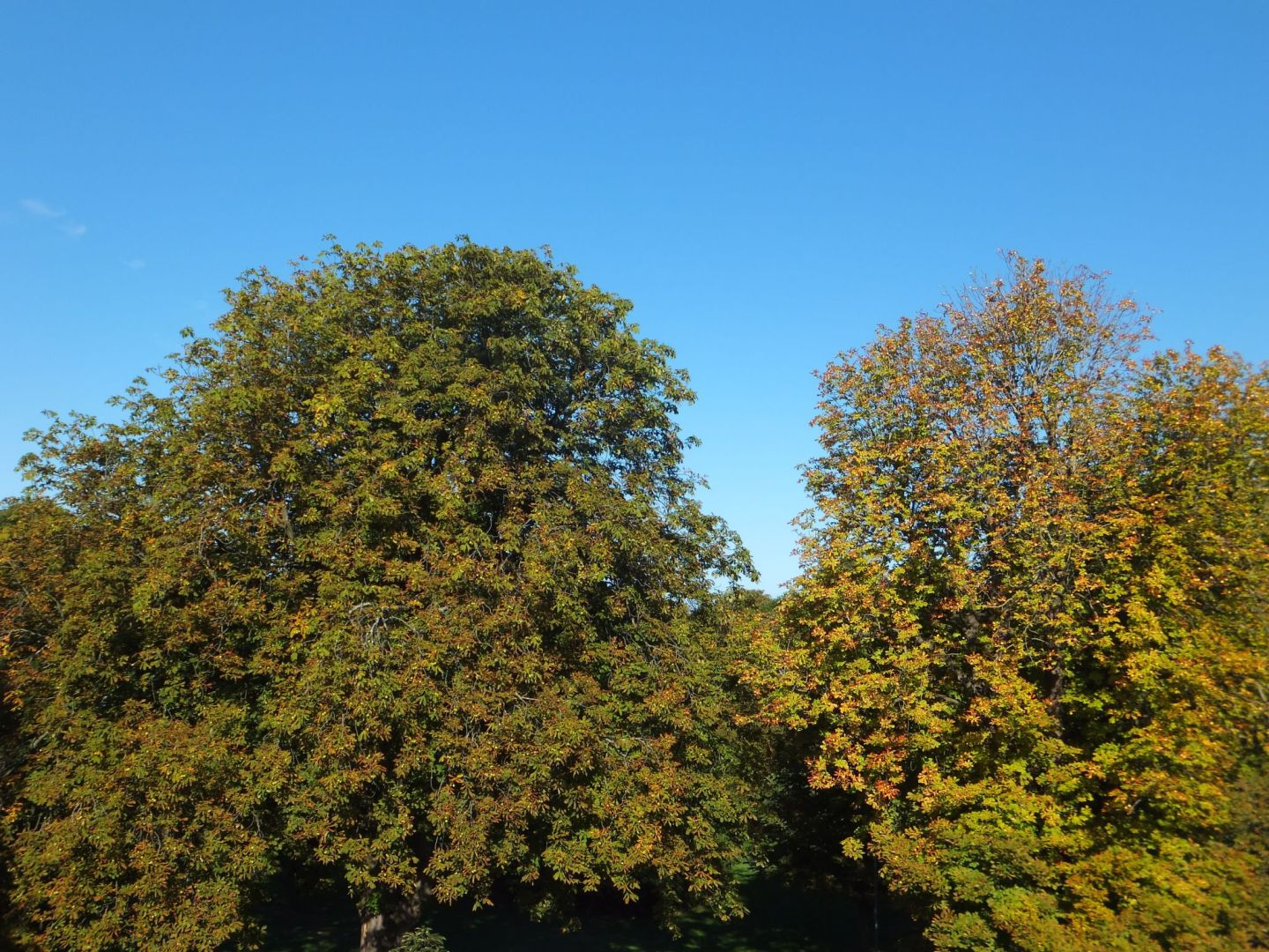 Autumnal trees
