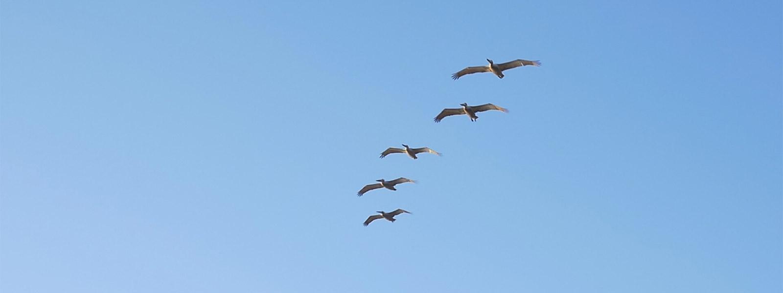 Still_Birds_bg