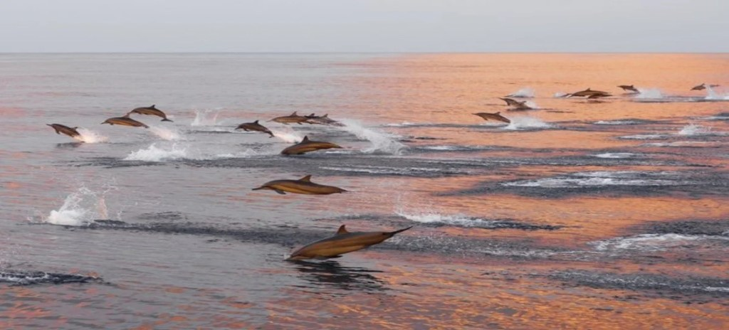 dolphins after coronavirus