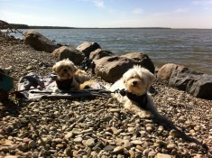 Sun Soaking at Hecla