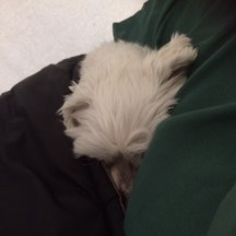 Cold Sleeper 1