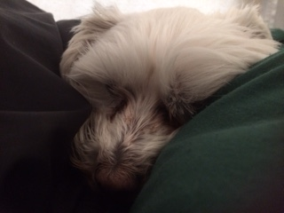 Cold Sleeper 4