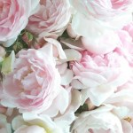 R is for Roses {A-Z Challenge}