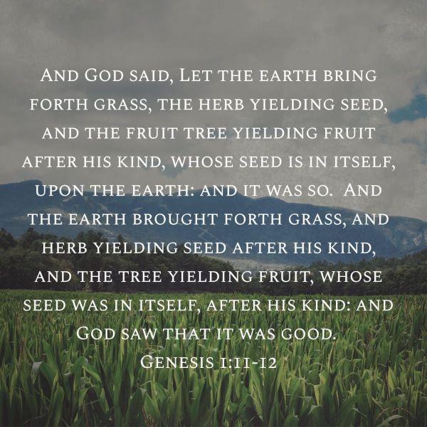 God saw it was Good