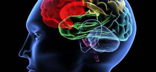 Fonte: http://1.bp.blogspot.com/-8n_bvwOBKMk/UhO5IYG4yOI/AAAAAAAAAk4/t74S6-IXTkI/s1600/Brain_11.jpg
