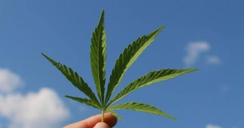 Legalização da canábis para uso pessoal discutida hoje no parlamento