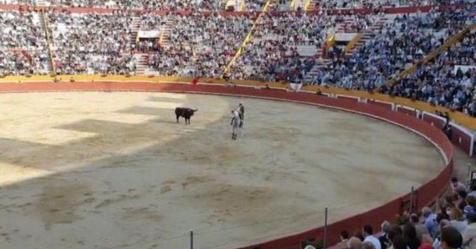 Municípios com atividade taurina contra alteração da idade para assistir a touradas