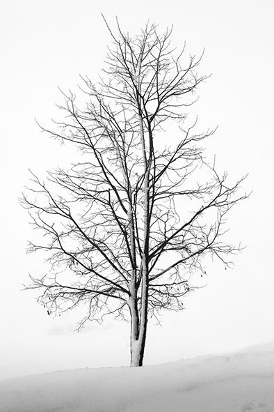 Photo Exhibition by Elie Bekhazi
