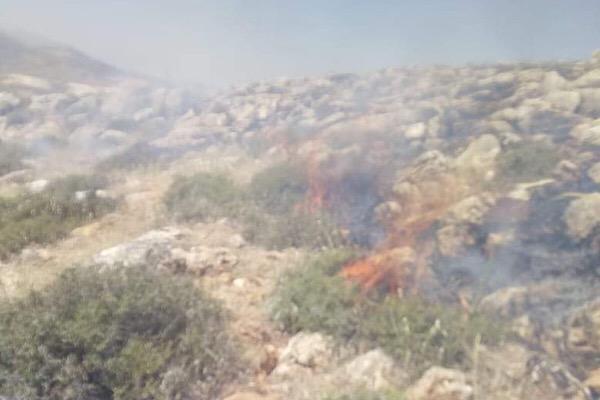 حريق أشجار وأعشاب في النبي شيت