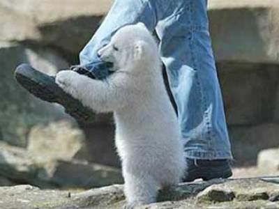 baby-polar-bear-3.jpg
