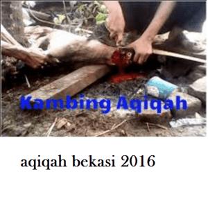 layanan aqiqah bekasi 2016