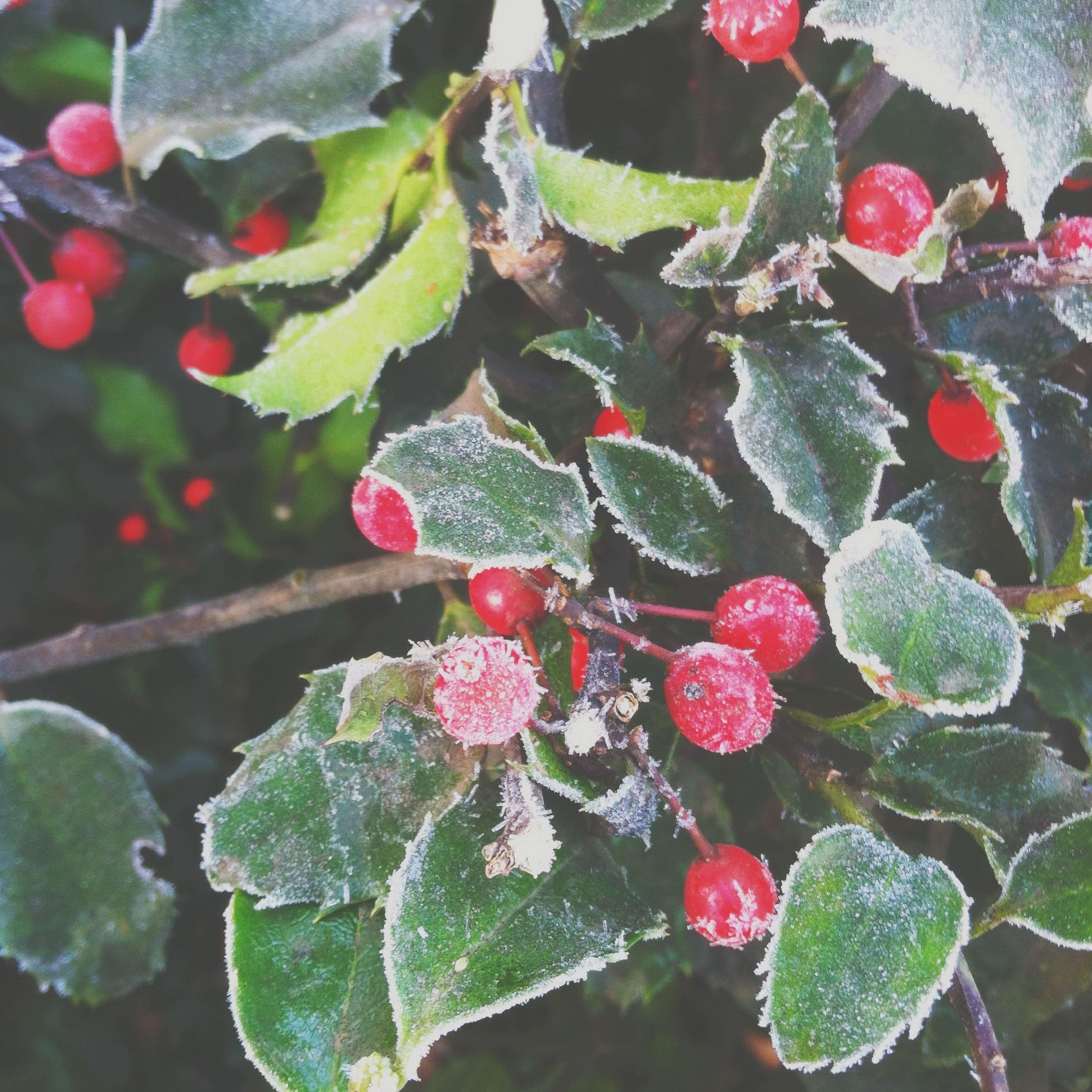 Snowy Blurry Christmas