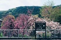 Arashiyama Photo copyright Rebecca Lau