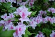Focused Flower Photo copyright Rebecca Lau