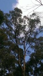 #Koalas