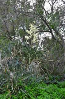 nature malta succulent be kitschig blog