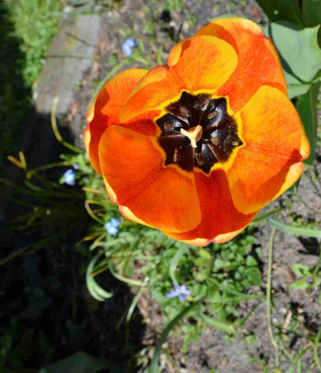 Orange Tulip be kitschig blog