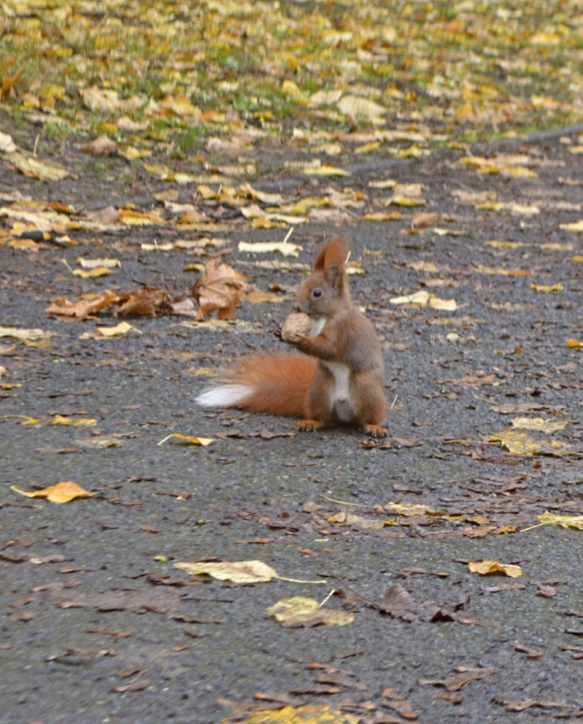 A Fall With Squirrels - Photos from the park in Berlin bekitschig.blog