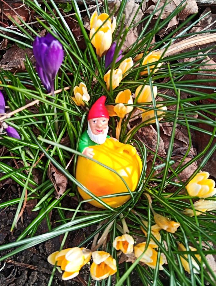 Unser Gartenzwerg Baby genießt den Frühling