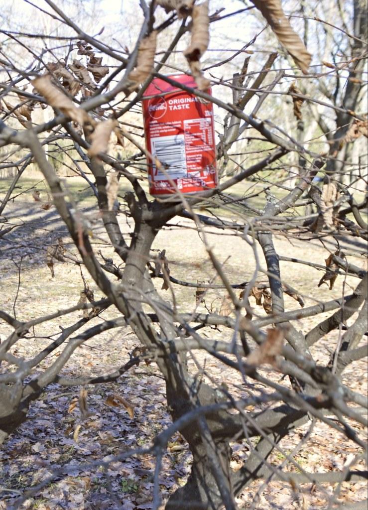 odd objects - bekitschig.blog Berlin  - Coke can n in tree - Coladose im Baum