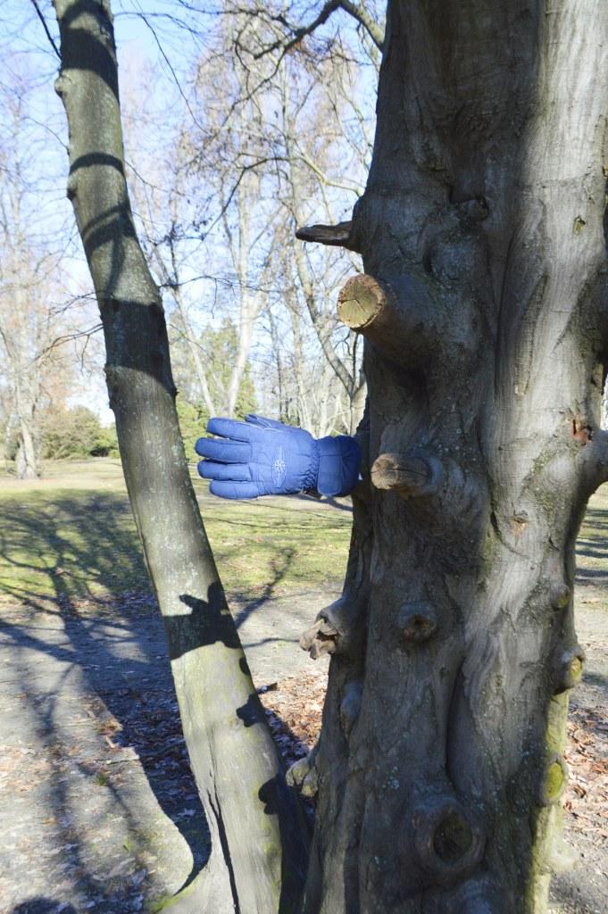 Einsamer Handschuh  im Baum - lonely glove - Humboldthain Berlin - be kitschig blog Berlin