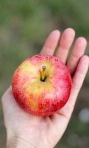 reto manzana roja
