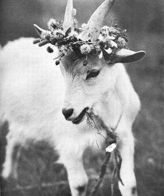 Să moară și capra vecinului…