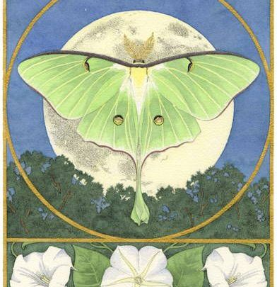 Luna Moth With Moonflowers - Ink and watercolor painting by Carrie Wild