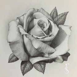 All done with this rose , it's my favorite one I've drawn so far Used…