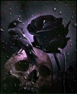Crow, black rose and skull.