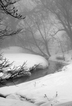 Misty Winter Morning   Outdoors