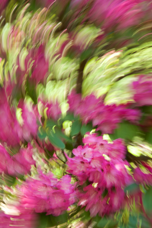 Photo 'Painting' of Rhododendrons