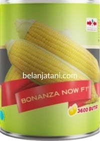 Jagung Manis Bonanza Now, Bonanza Now F1, Jual Jagung Manis Bonanza Now, Belanja Tani