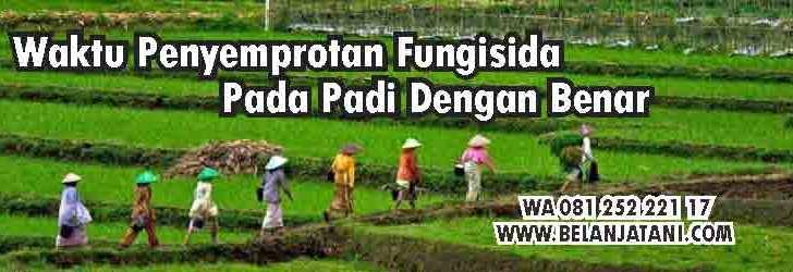 Waktu Penyemprotan Fungisida Pada Padi, Fungisida,Petani,Pertanian,Benih