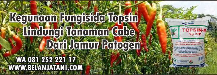 Kegunaan Fungisida Topsin,Jamur,Cabe,Pertanian,Budidaya Cabe