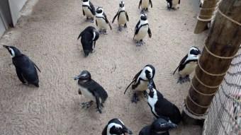 Watching a penguin parade.