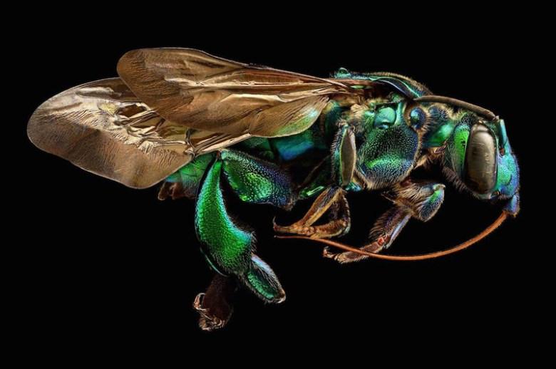 LevonBiss_serangga-makro-6