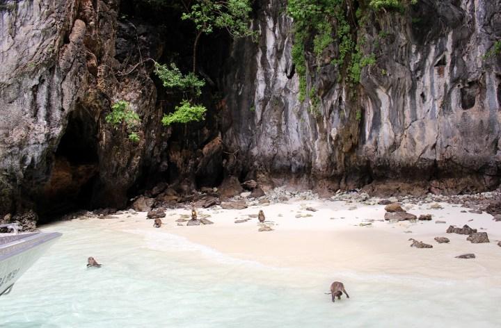 monkey bay phuket