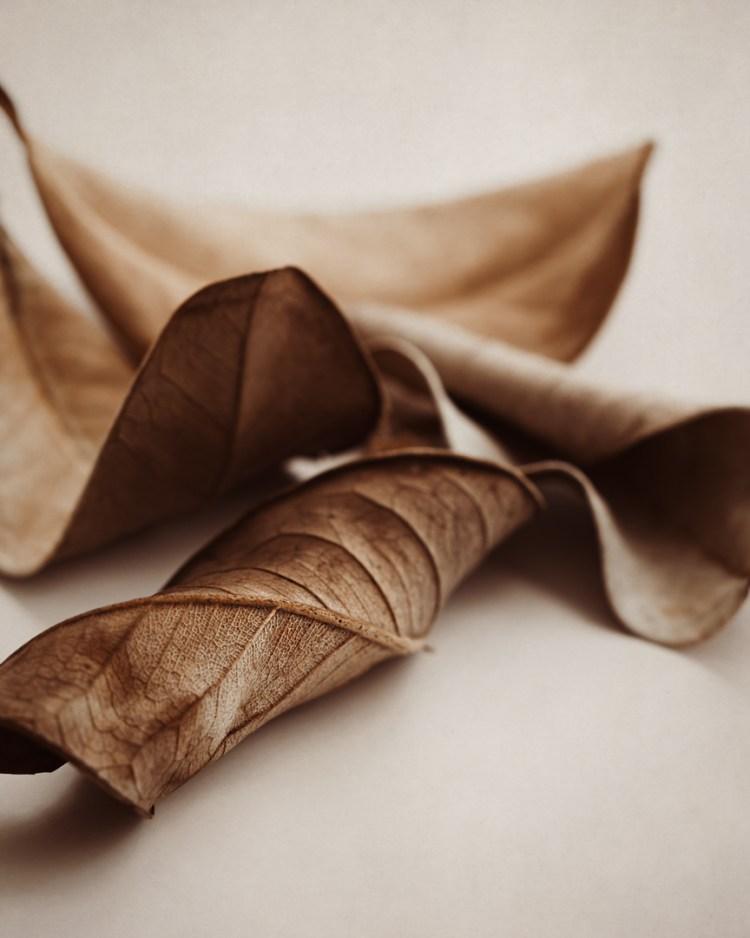 neutral minimal dried leaves