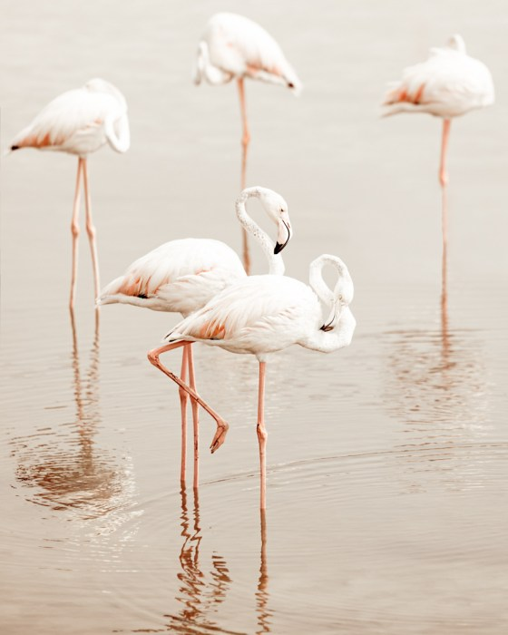 flamingo poise poster photo
