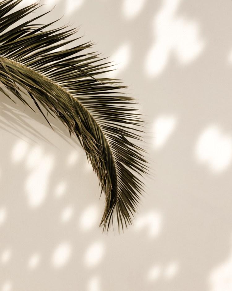dappled light palm frond