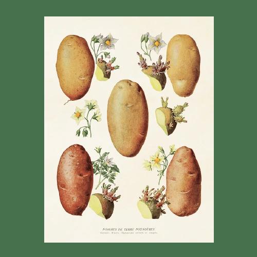 vintage poster kartoffeln 18 24