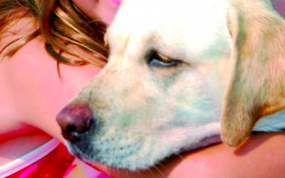 Les 7 coses que no agraden als gossos