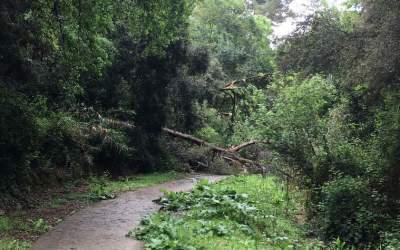 El temporal de pluja causa desperfectes a diferents espais de Bellaterra