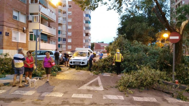 Arbre caigut al carrer Vilanova i la Geltrú, al pla del Bon Aire