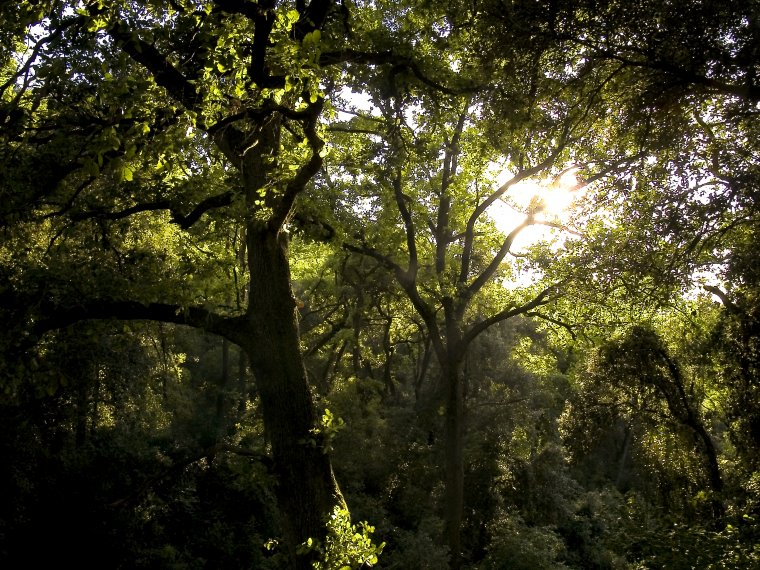 Bosc de Collserola